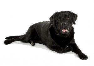 hondengedrag
